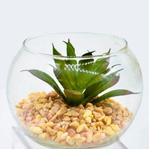 bomboniera pianta grassa 1